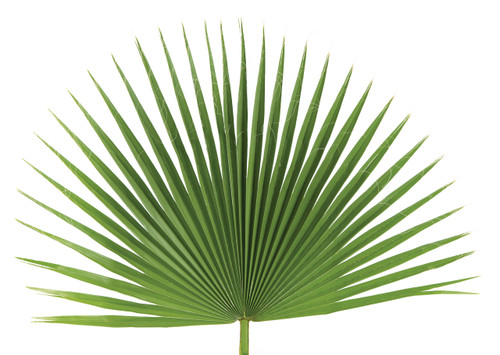 Palm Sunday Palm Fan - BAG/4