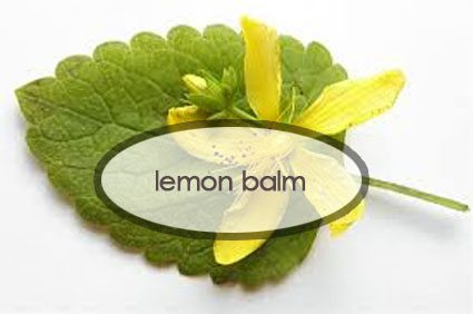 lemon-balm-benefits.the-good-stuff-botanicals.jpg