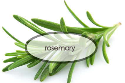rosemary.the-good-stuff-botanicals.jpg
