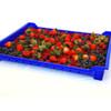 Thunderbird Plastics Shallow Berry Flats