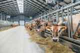 Breweries Embrace Sustainability with Spent Grains for Animal Feed
