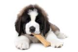 FSMA Preventative Controls for Pet Food Manufacturers