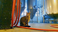 Cats in Your Brewery? Watch Out For an FDA Audit