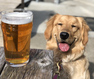 Are Hops Harmful to Dogs?