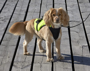 Baltic Zorro Pet Buoyancy Aid Lifejacket