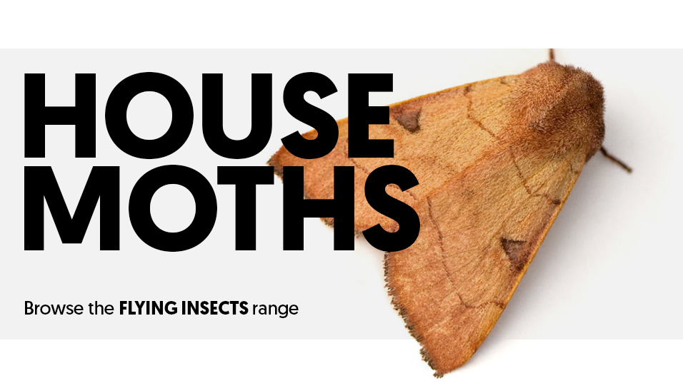 Moths in the Flying Insects category.