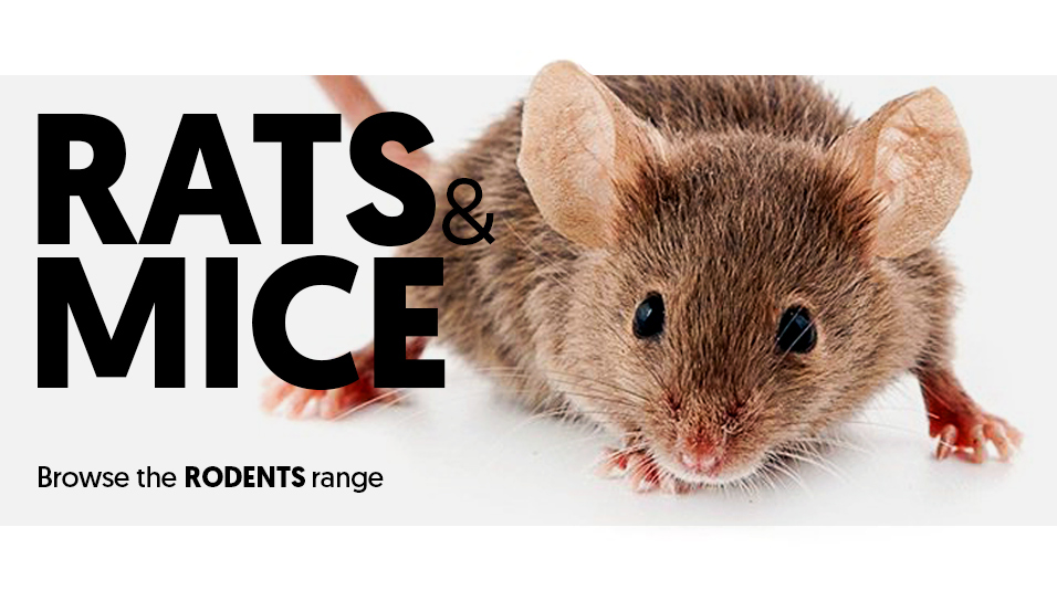 Rats and Mice in the Rodents category.