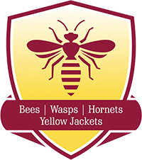 Bees | Wasps | Hornets | Yellow Jackets