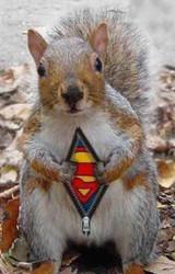 My Emotional Support Squirrel