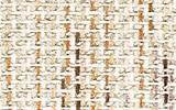 shirakawa/fabric/c23.jpg