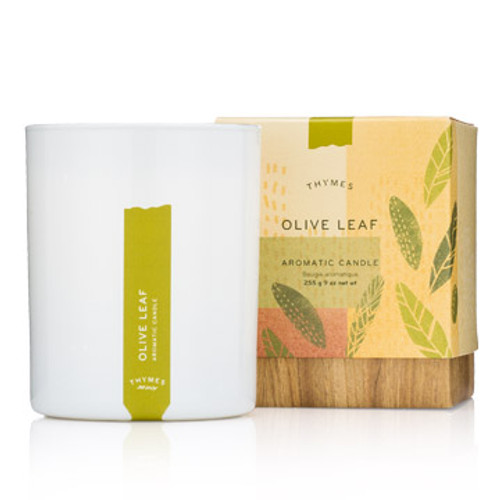 Thymes Candle - Olive Leaf