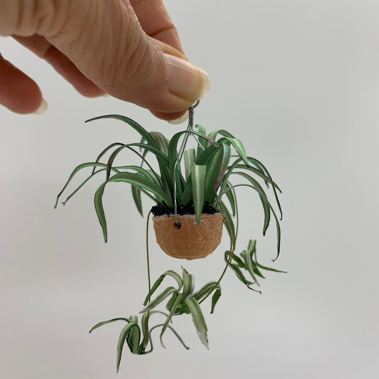 Hanging Spider Plant (UFN1019)