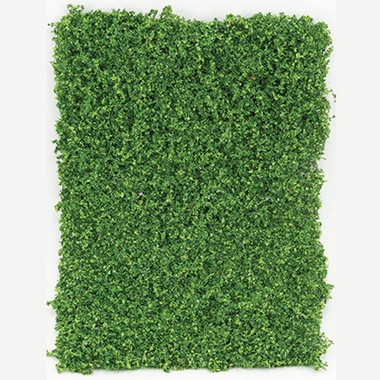 Medium Green Leaf Micro-Phlox (CA4121)
