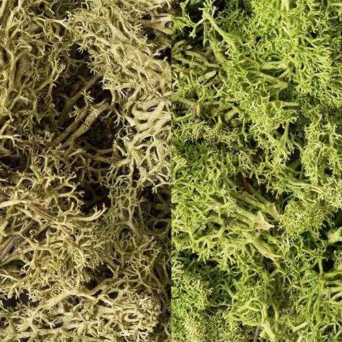 Representative sampling of lichen color