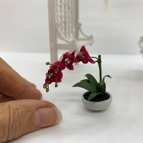 Four-Bloom Potted Orchid (UFN3011)