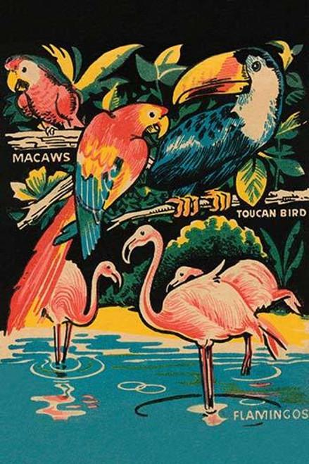 Tropical Hobbyland - Birds