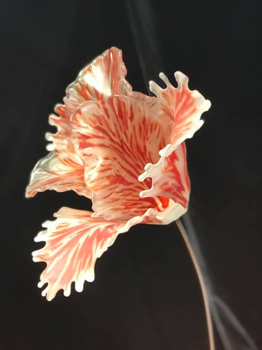 1/17-19 The Rembrandt Tulip, with Craig Mitchell Smith