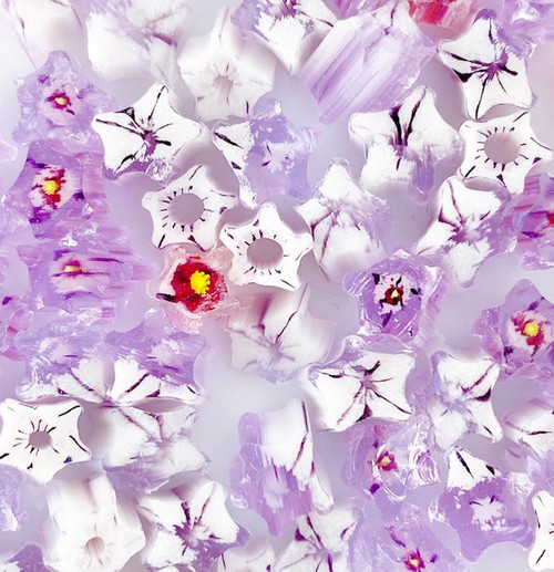 White & Neo Lavender Star Flower