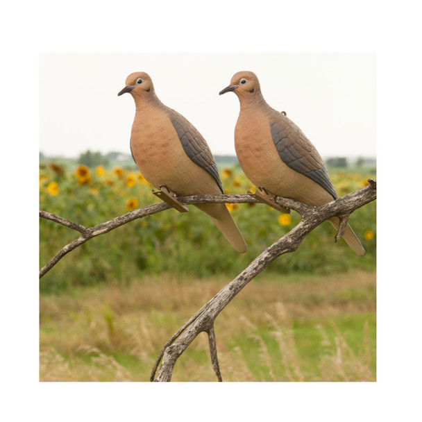 AVERY 6 Pack of Mourning Dove Decoys (72005)