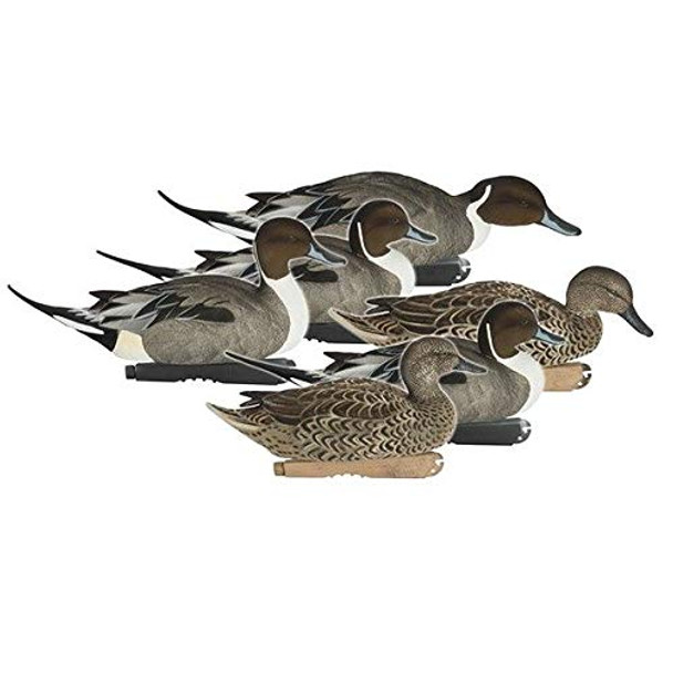 AVERY Pro Grade FFD Elite Pintails (74110)