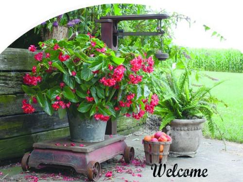 Begonia Slider