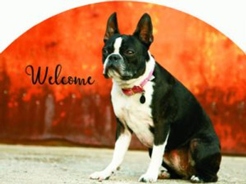 Boston Terrier Slider