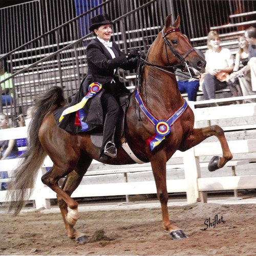 Saddle Seat Rental Suit. 3 piece or Formal