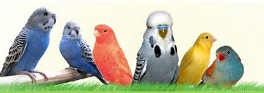 breathing-difficulties-in-birds-image.jpg