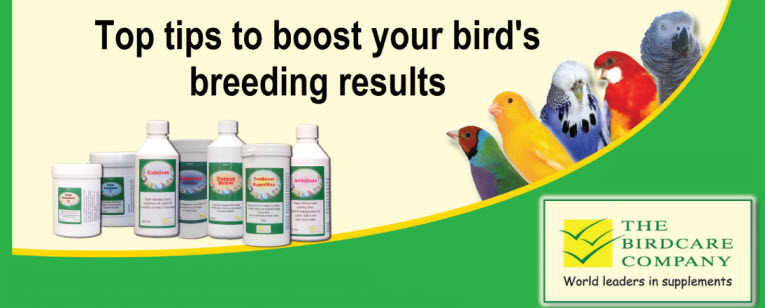 breeding-birds-top-tips-web.jpg