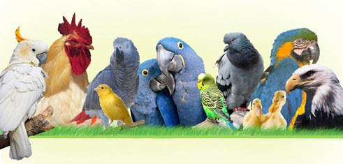 breeding-nutrition-image.jpg