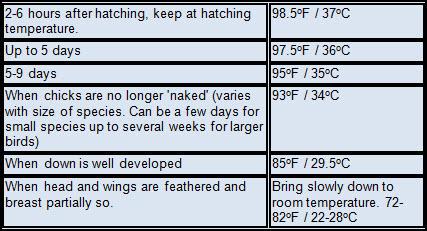 brooder-temperatures.jpg