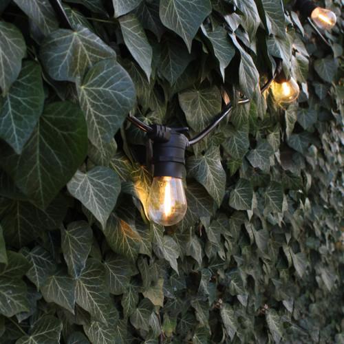 20 Metre, 40 Clear S14 Lamp Festoon String, 500mm Spacing with 40 bulbs, B22, Warm White4