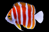 Quality Marine Receives Rare Species from the Cook Islands
