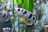 Different Displays - Archerfish