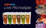 Introducing Nutramar Live Microalgae