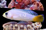 Three Small Aquarium Fish You Hadn't Considered