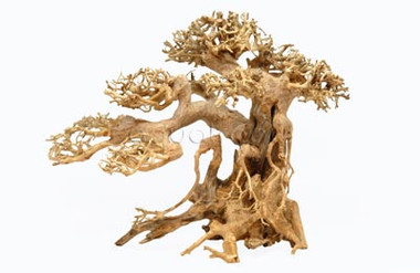 """Bonsai Wood Medium Approx. 11-12"""" x 4-5"""" x 8-9"""" :: 0960572"""