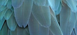 Feathers & Wings