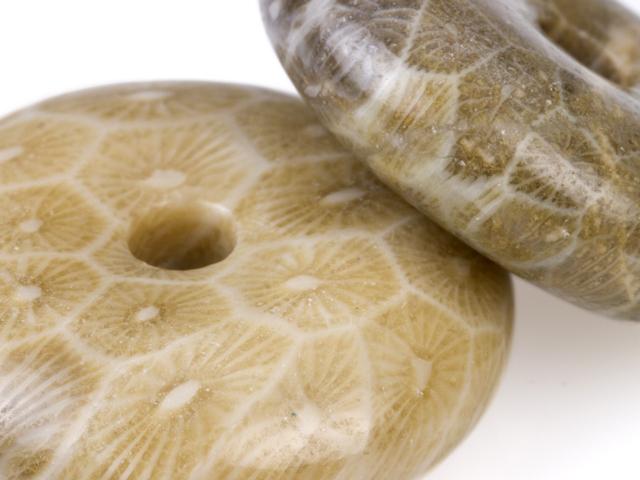 Image of fossil jasper gemstones