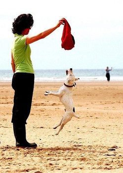 Why Jumping is Bad for Dogs (and How to Stop it)