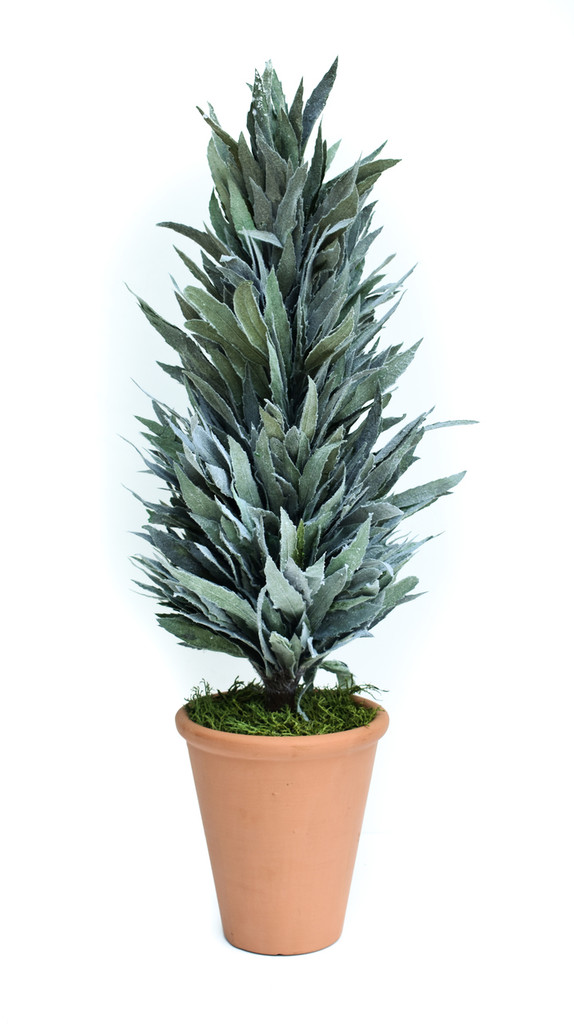 """PRESERVED MAHONIA FROSTED CONE TOPIARY - 24"""""""