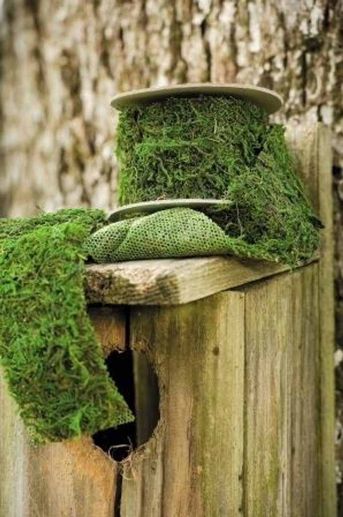 """MOSS RIBBON PACKED 6  (2.3"""" x 47"""")"""