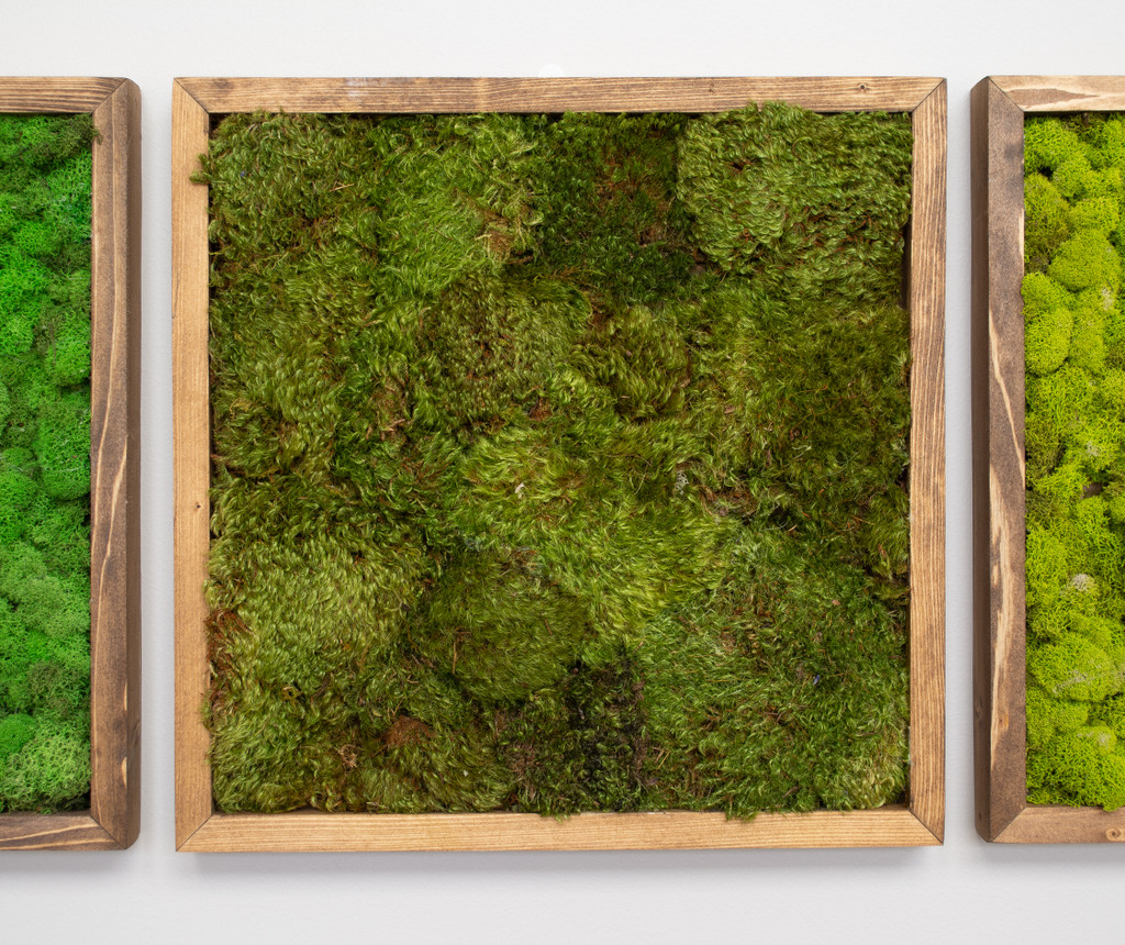 "MOSS WALL ART - 16"" SQ - MOOD MOSS BRWN"