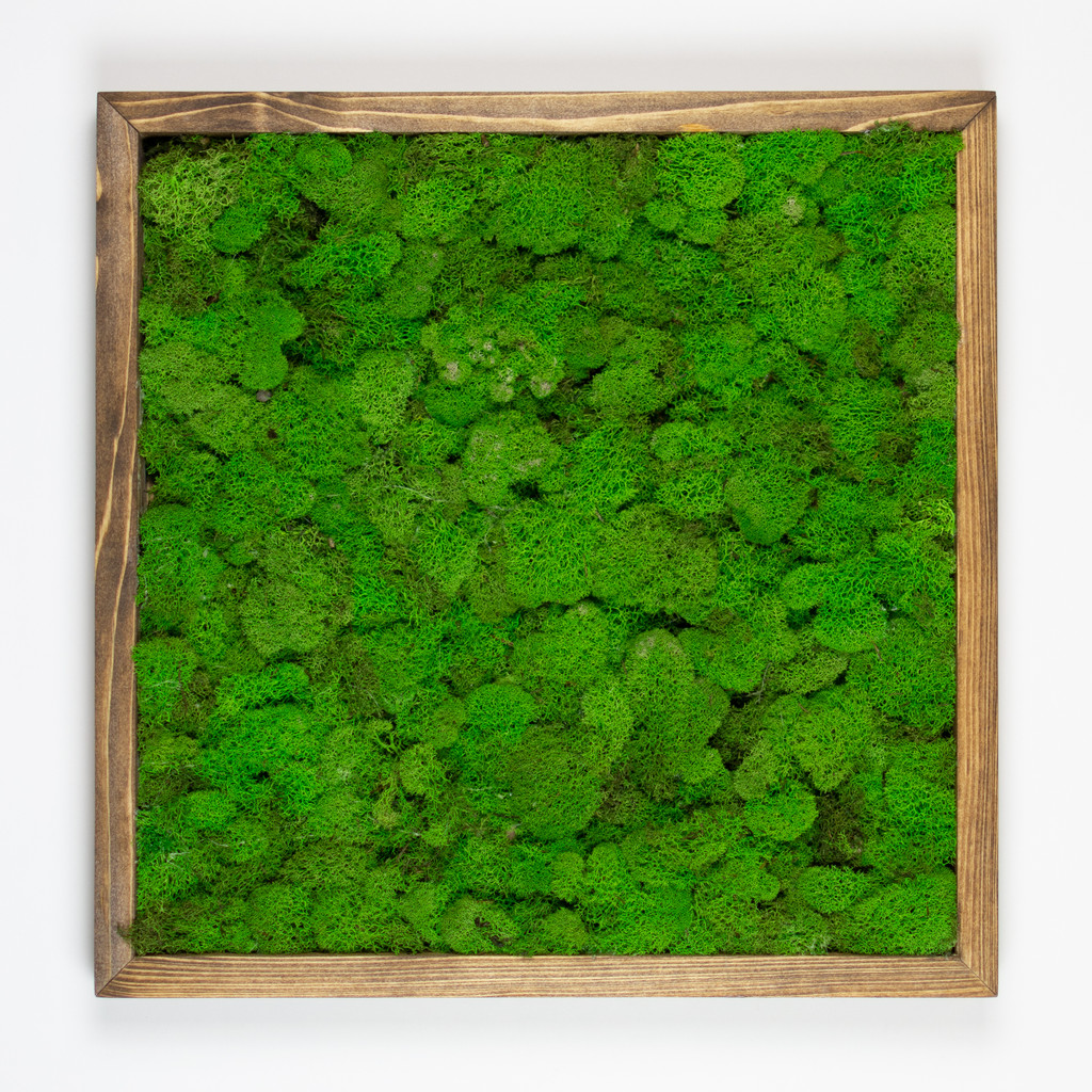 "MOSS WALL ART - 24"" SQ - SPRG GREEN MOSS BRWN"