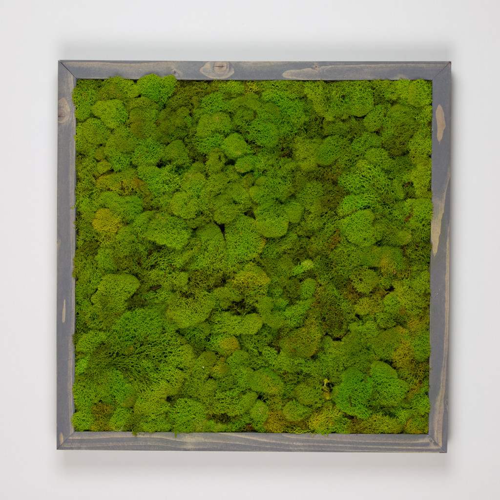 "MOSS WALL ART - 24"" SQ - CHARTREUSE MOSS GREY"
