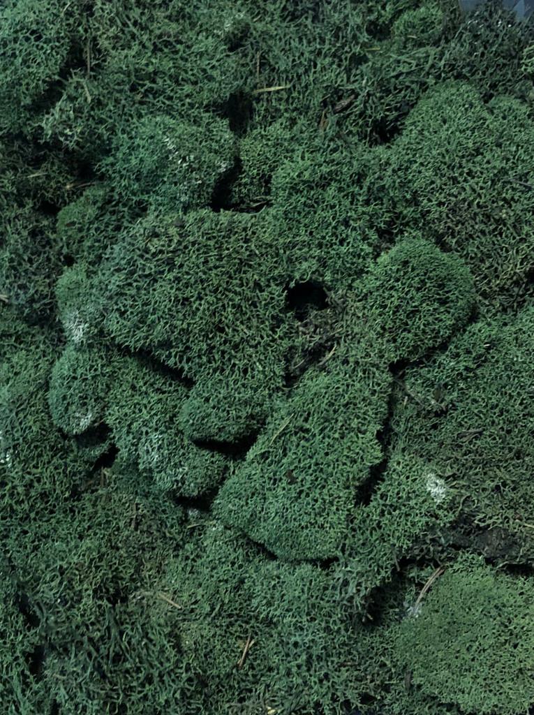 REINDEER MOSS 3 LB BULK - GREEN