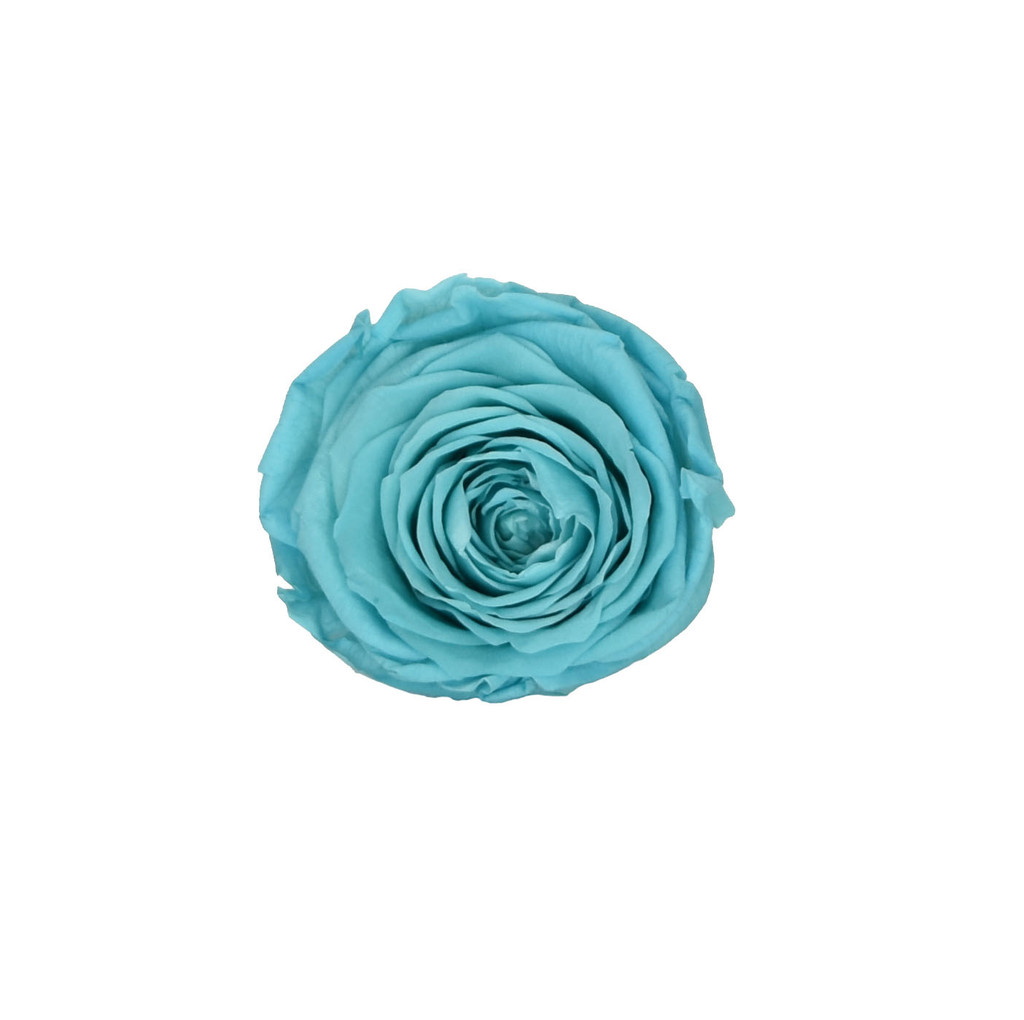 PRESERVED ROSE HEAD - SKY BLUE - 5-6 CM DIAM. 6 HEADS