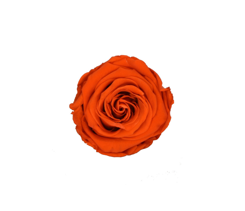 PRESERVED ROSE HEAD - ORANGE - 5-6 CM DIAM. 6 HEADS