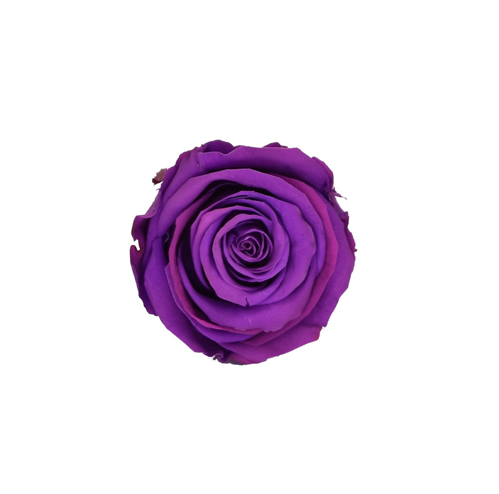 PRESERVED ROSE HEAD - PURPLE - 5-6 CM DIAM. 6 HEADS
