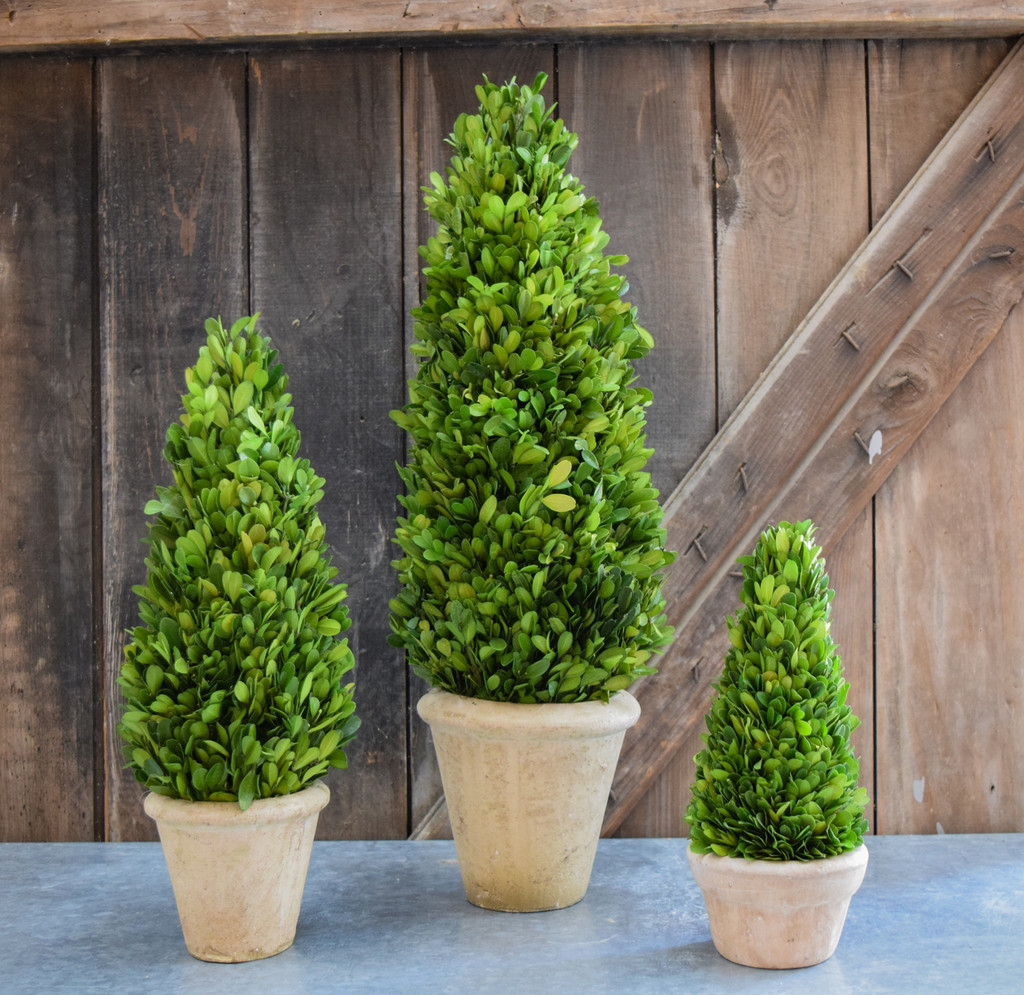"Shown with 16"" and 24"" Cone Topiary"